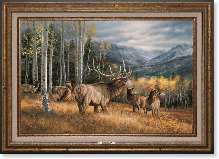 Wildlife Experience: Framed Canvases